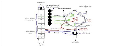 medicina del dolor. sistema nervioso. micción.