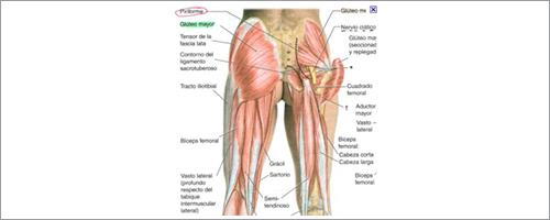 medicina del dolor. musculatura del suelo pélvico.