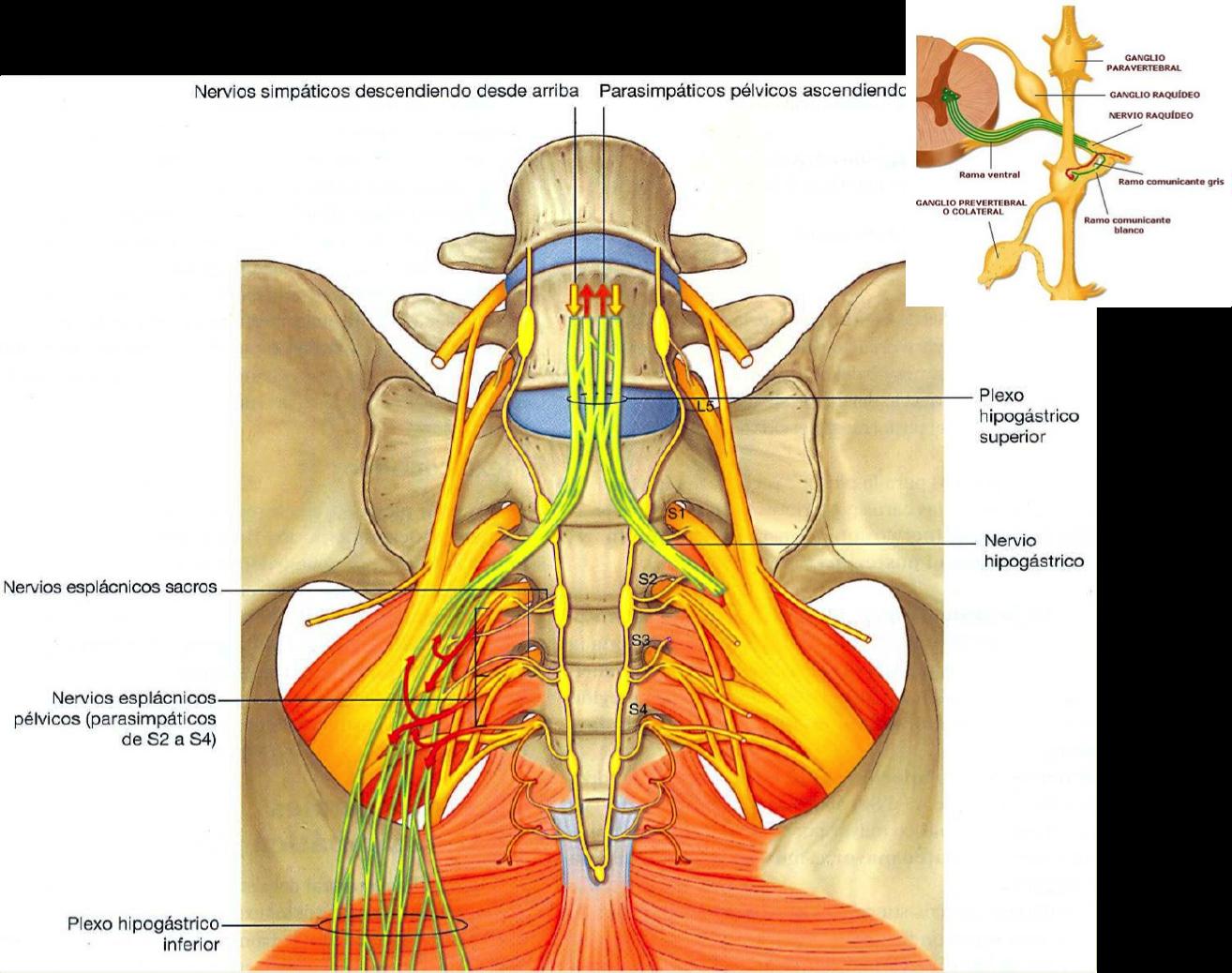 Radiofrecuencia de raíces sacras - Medicina del Dolor