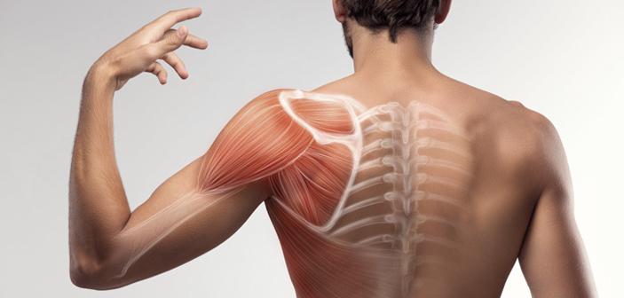 ¿Por qué duele la espalda? Anatomía básica